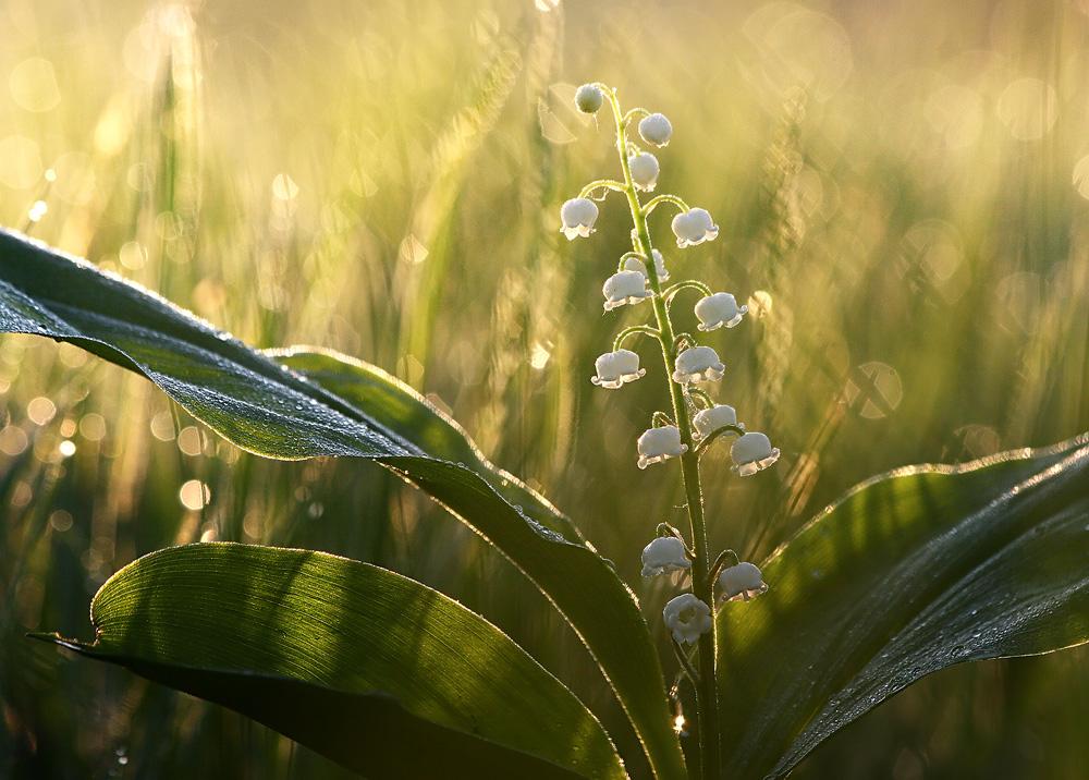 Природные фотографии от Вадима Трунова