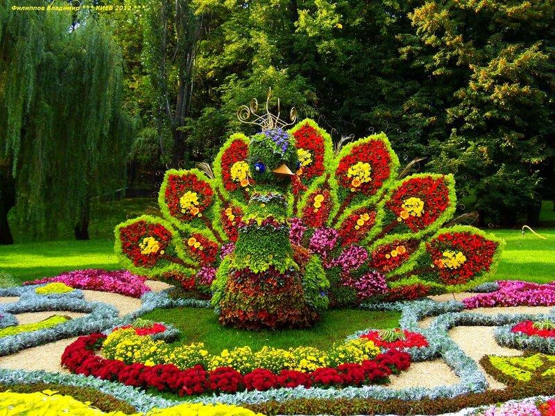 Выставка цветов 2012 в Киеве.