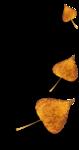 AutumnMelody_by GalinaV_el (58).png