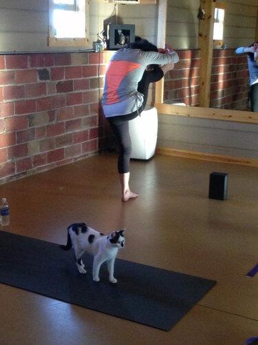 Помощь бездомным животным - кото йога