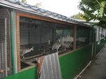 """павлины, фазаны, куропатки 2012г. в питомнике """"Don-Zoo"""""""