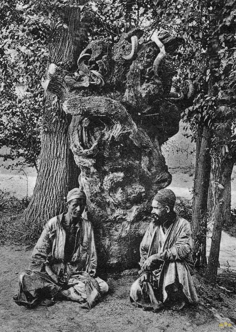 68. Дерево на улице Аккурганская.jpg