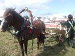Свадебная лошадь Роська
