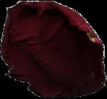 «Vintage Rose» 0_8f567_9372b2f3_S