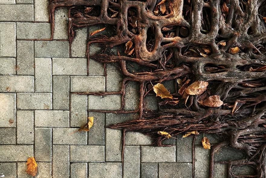4. (© Wei-Feng Xue)