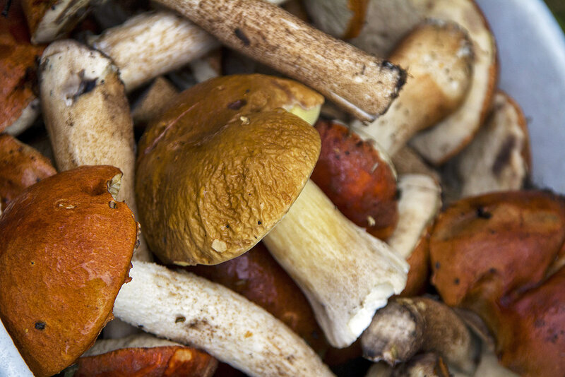 когда заканчивается грибной сезон в подмосковье 2016