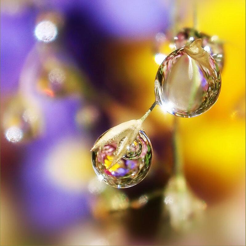 алмазный фонд цветов