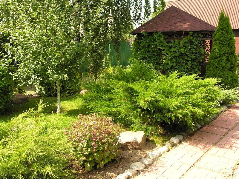 "можжевельник Mint julep Juniperus media ""Mint Julep"""