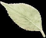 kb-PrecBegin_G_leaf.png