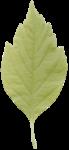 kb-PrecBegin_G_leaf3.png
