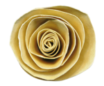 LaurieAnnHGD_PaperRose.png
