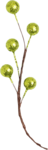 Lilas_Old-Garden_elmt (76).png