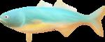 NLD Fish.png