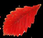AutumnMelody_by GalinaV_el (49).png