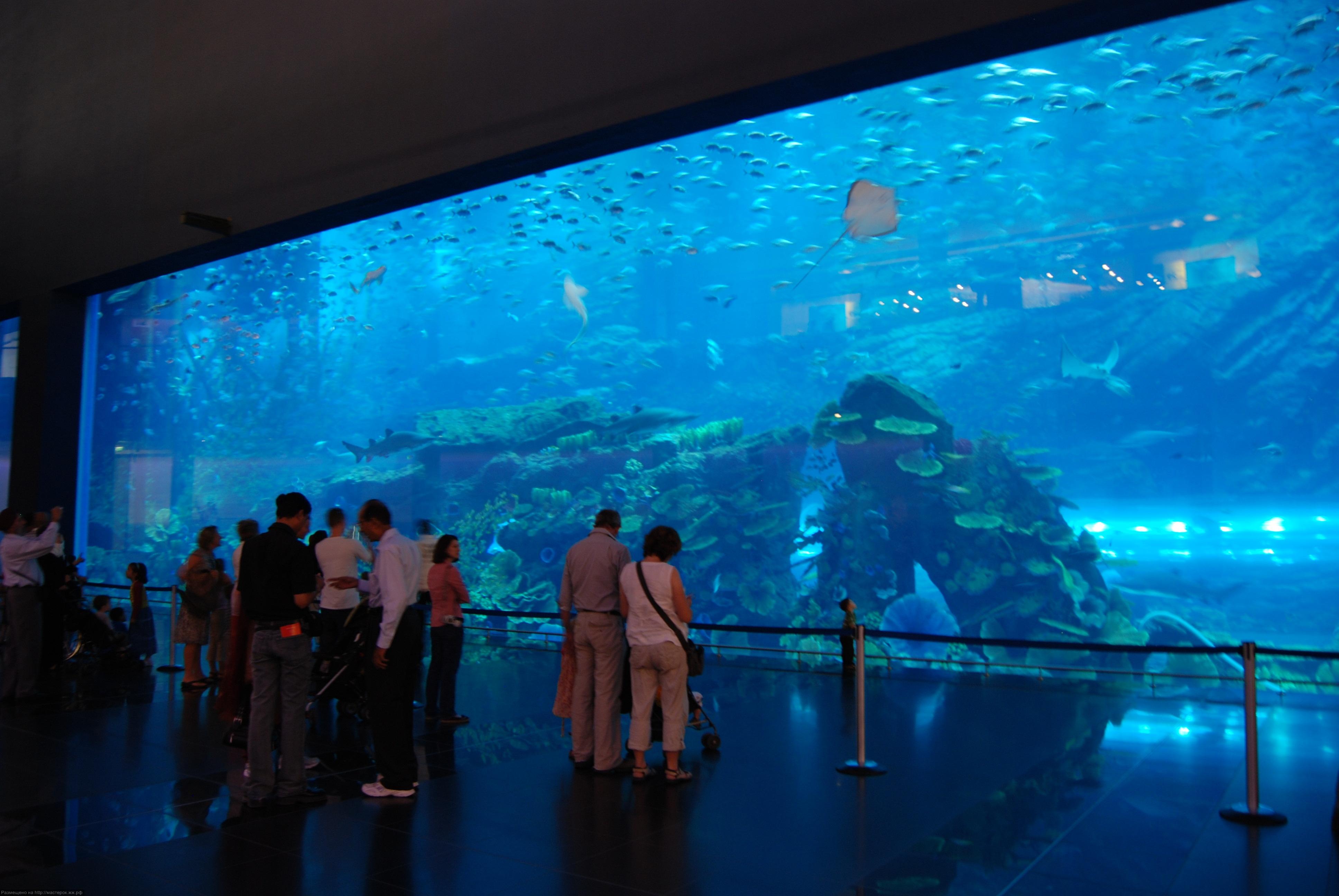Зоопарк в москве. подводный мир 3