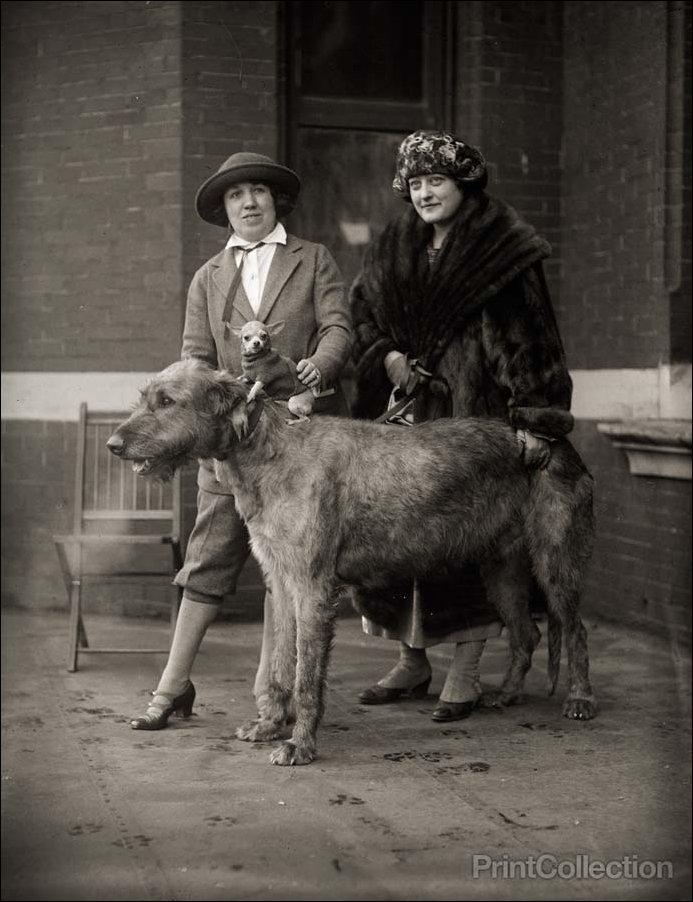 Старинные фото забавных животных