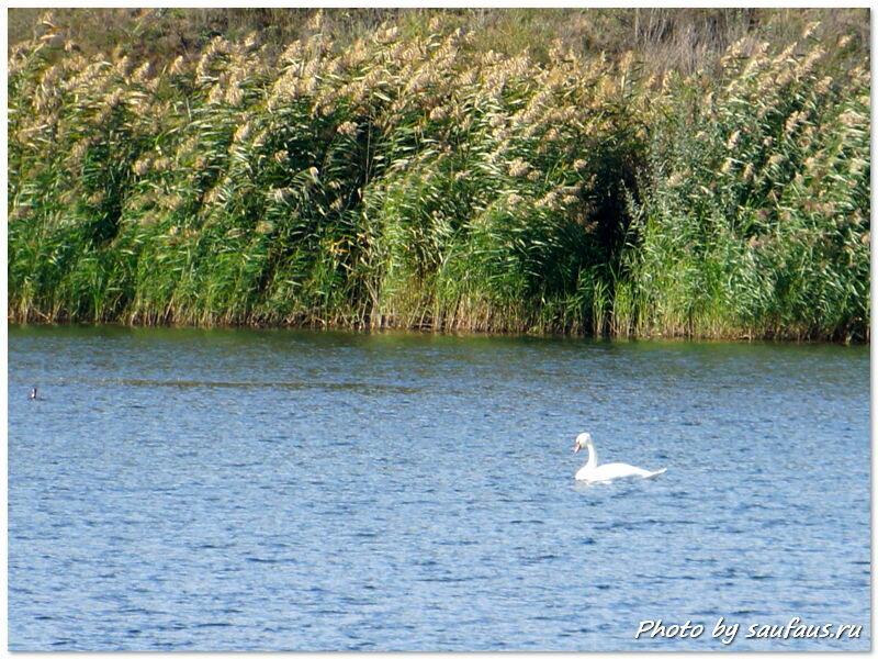 Ледебь на озере смерти в Тольятти