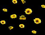 «AD_Sunflower_summer»  0_8c7bd_5da78a13_S