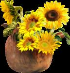 «AD_Sunflower_summer»  0_8c7ee_241f070a_S
