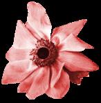 «Four Roses»  0_8cdce_fa27458a_S