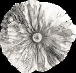 «Four Roses»  0_8ce0e_efffcef7_S