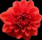 «Brigit_Flowery_Meadow» 0_8d472_375369dc_S