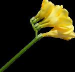 «Brigit_Flowery_Meadow» 0_8d478_67254bf4_S