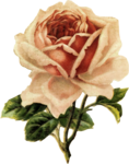 mzimm_bits_of_yesterday_rose.png