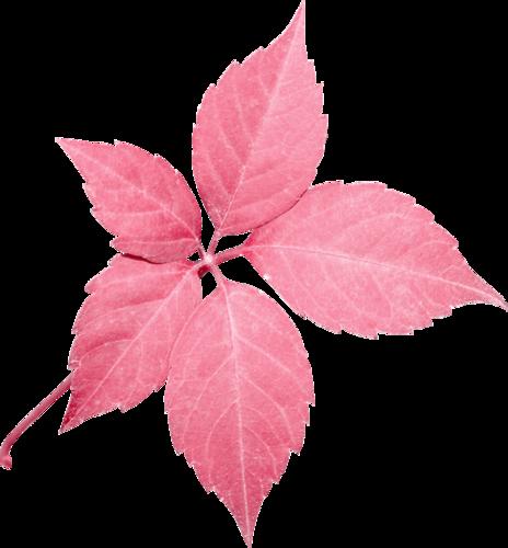 «Greedy-Pink» 0_8fcf0_236986c9_L