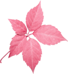 Lilas_Greedy-Pink_elmt (80).png