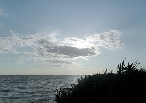 На берегах Бейсугского лимана, июнь 2011