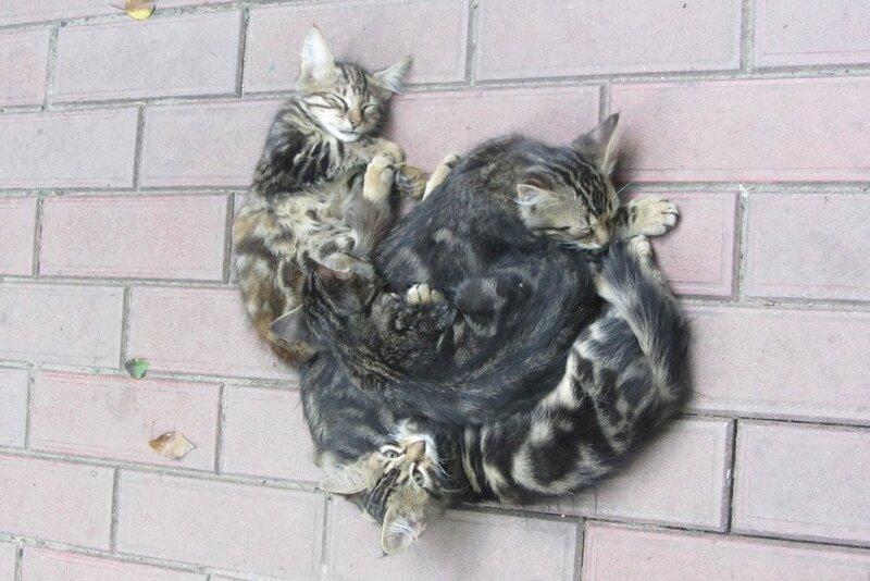 Мой кошкин дом - Страница 2 0_933ec_6751fd32_-1-XL