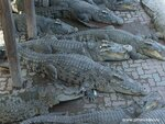 Крокодилы.Тайланд