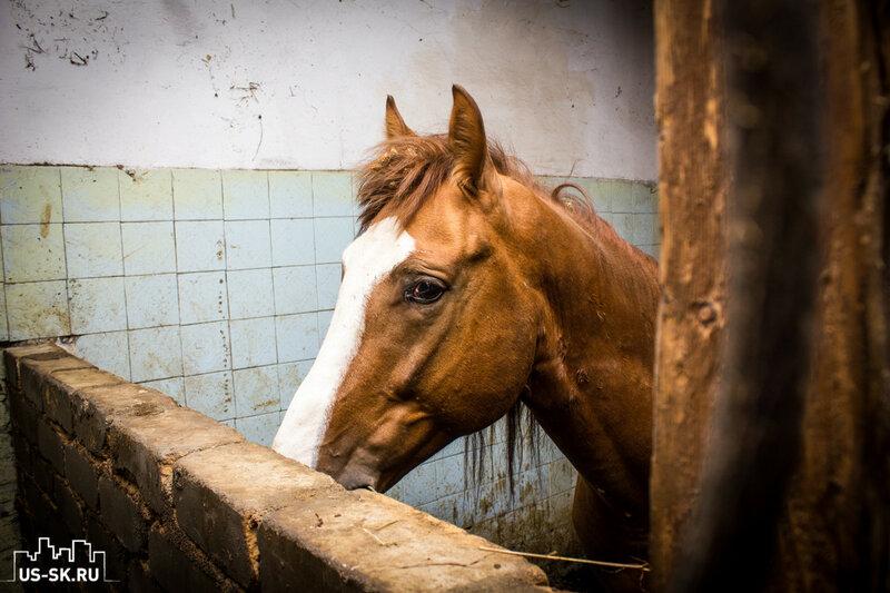 лошадь в конюшня в Уссурийске
