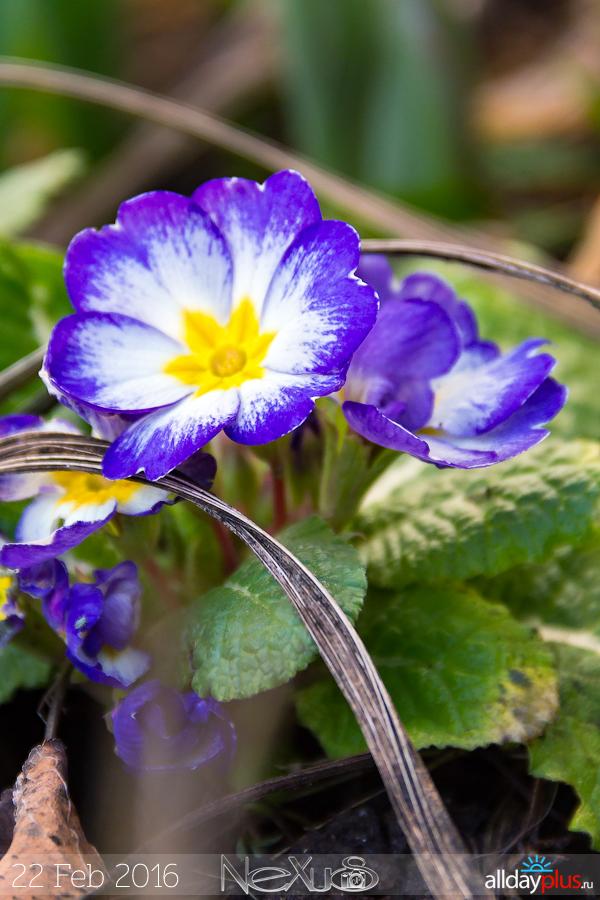 Я люблю все цветы, выпуск 207 | Что цветёт зимой.