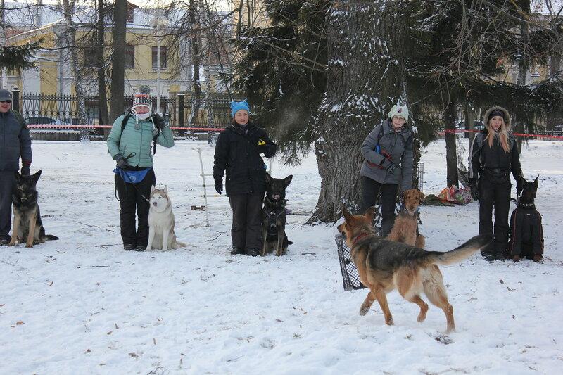 В Городском саду Твери дрессированные собаки показали свое мастерство / фото