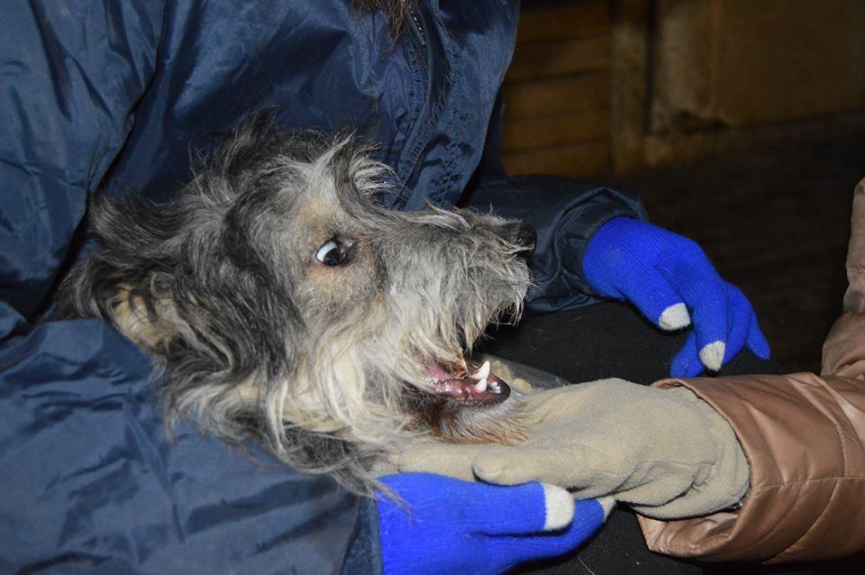 Бони собака из догпорта