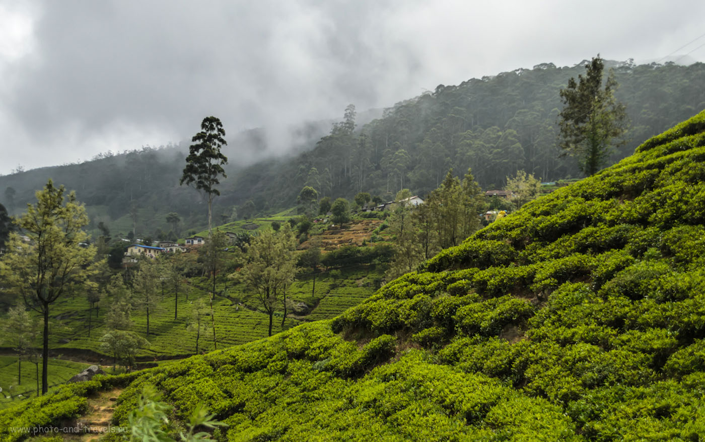 Фото 11. Чайные плантации компании Mackwoods Labookellie. Отзыв о поездке из Нувара Элии. Отчет о поездке по Шри-Ланке дикарями.