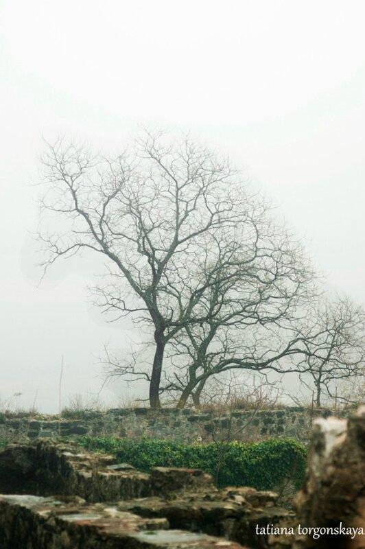 Дерево в Шпаньоле