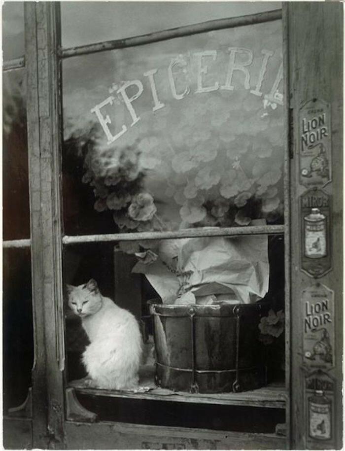 1938. Белый кот в окне продуктового магазина