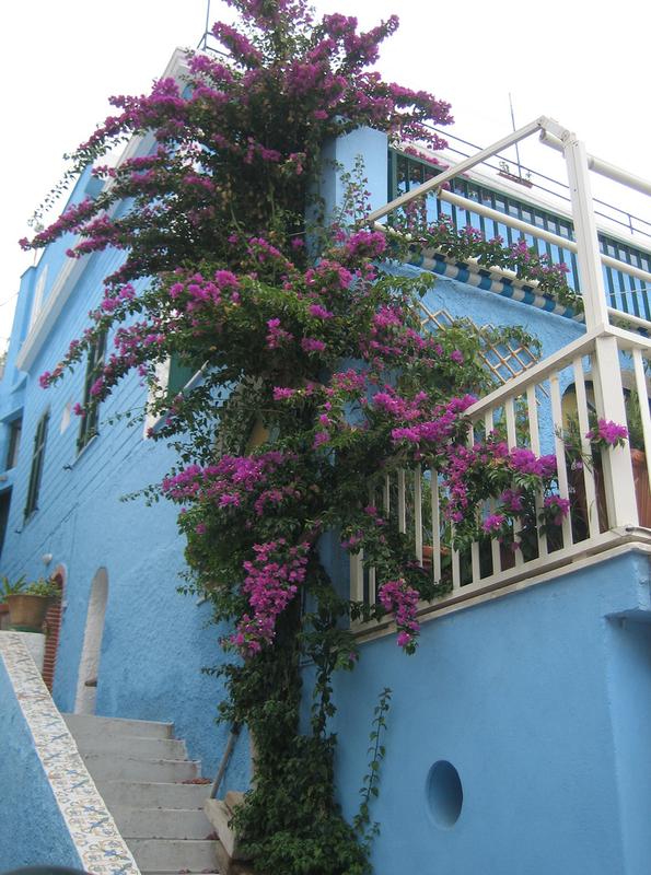 каждого цветущие лианы фото с названиями так строительство гаражей