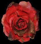 feli_btd_red rose.png