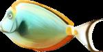 NLD Fish 2 b.png