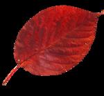 AutumnMelody_by GalinaV_el (48).png