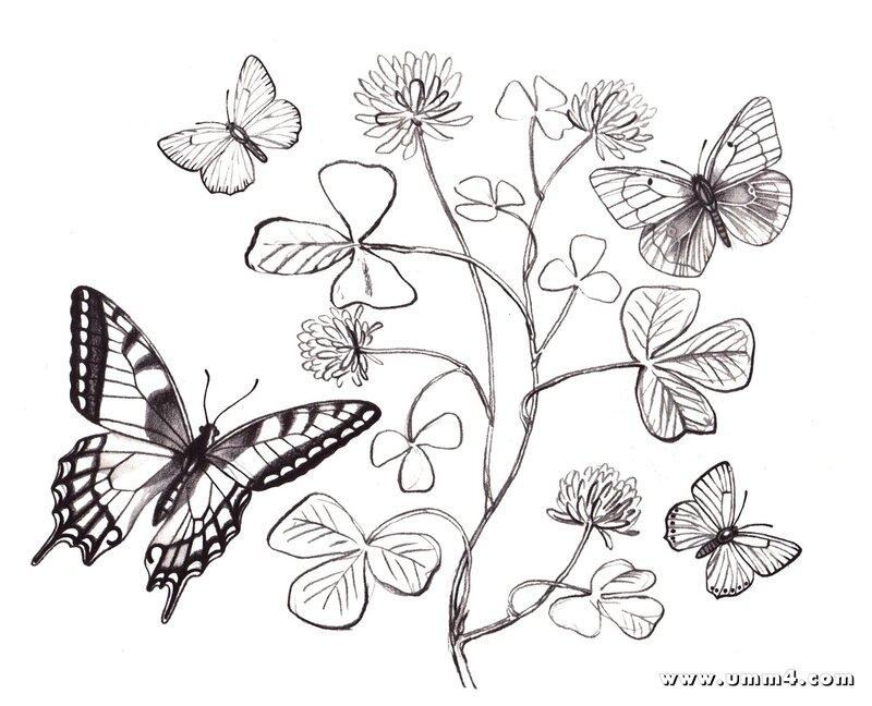 Бабочки и цветы картинки раскраски 1