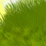«Рыжий котенок» 0_8c691_ad1f5aa1_S