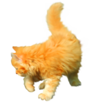 «Рыжий котенок» 0_8c6bf_3c2e81dd_S