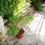 «AD_Sunflower_summer»  0_8c81e_d157b771_S
