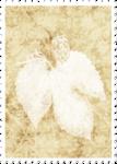«Bee_Silence»  0_8c959_88a73e91_S