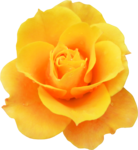 «Brigit_Flowery_Meadow» 0_8d483_fb38bcbd_S